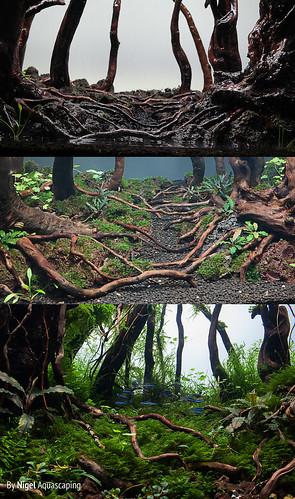 details growth by nigel | by nigel_kh