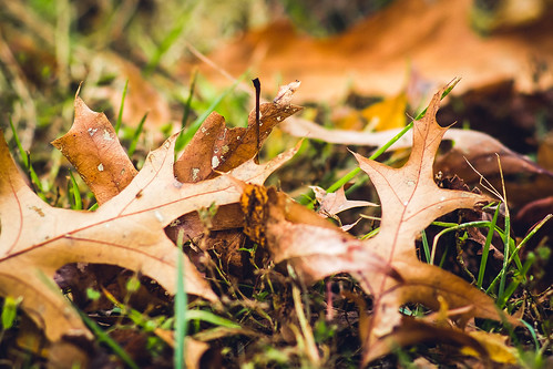 Vintage autumn vibes