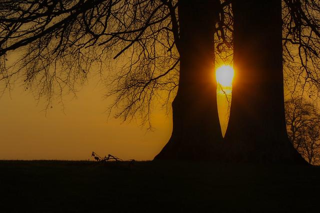Trunks & Sun