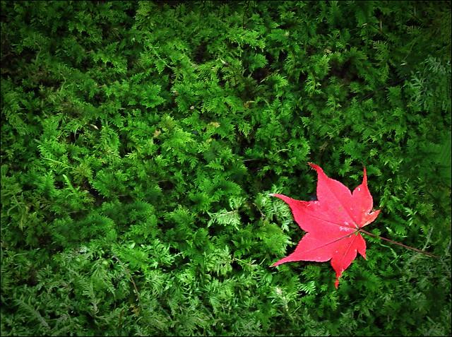 Just One leaf