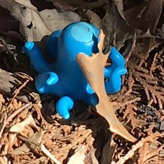 The very rare blue land octopus
