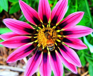 Bee in my Bonnet | by Stanley Zimny (Thank You for 40 Million views)
