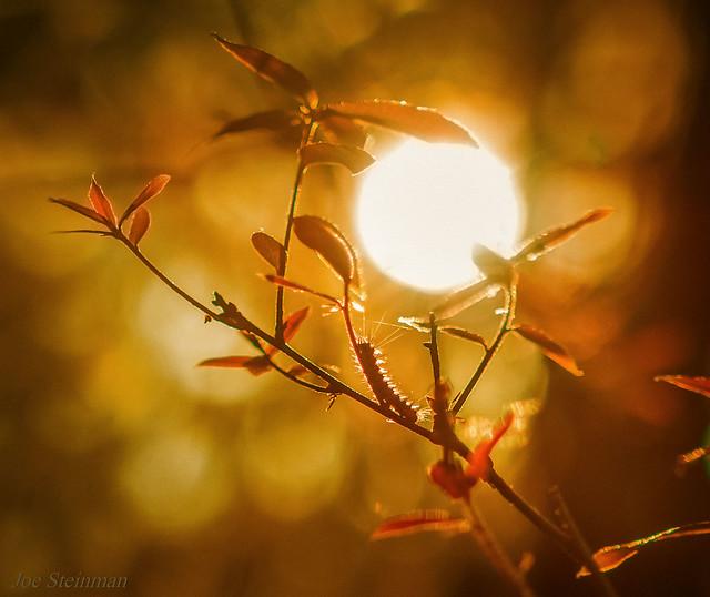 Caterpillar Reaching for the Sun