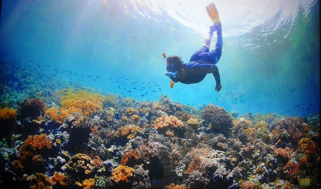I enjoyed an underwater photography exhibit.  This is the Wakatobi Islands. by bryandkeith on flickr