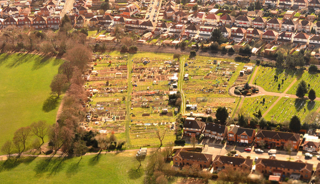 Allotments and houses, West London