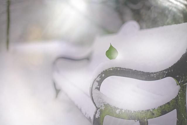 Frozen in Time...    #7DWF #MondayTheme #FreeTheme