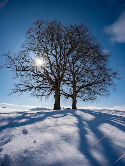 Twin Trees & Snow