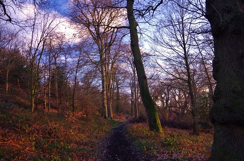 woods trees winter sunset golden hour path forrest
