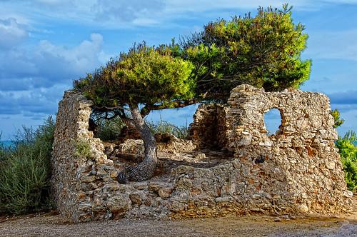 pino árbol casaenruinas naturaleza poderdelasplantas