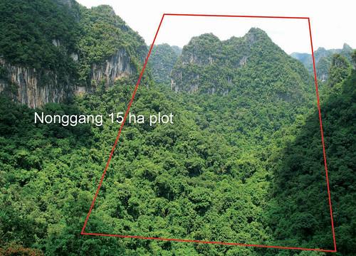 Wed, 07/22/2009 - 13:37 - Nonggang Forest Dynamics Plot