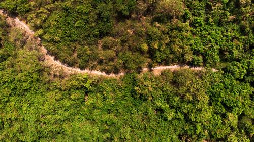 dji snake green forest manila ph air birdview