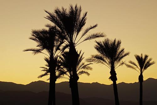 palm palme baum tree sunset sonnenuntergang berge mountain laquinta outdoor hilton hotel homewoodsuites homewoodsuitesbyhiltonlaquinta stadt city america amerika usa unitedstates california kalifornien