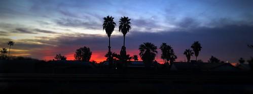 iphoneographer iphoneography iphonology iphoneology clouds sky neighborhood tree palmtree sunset sunrise chandler arizona tempe