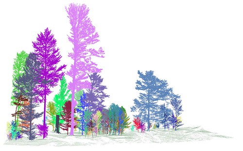 Tue, 03/13/2018 - 15:11 - Segmented trees from TLS on Zofin plot