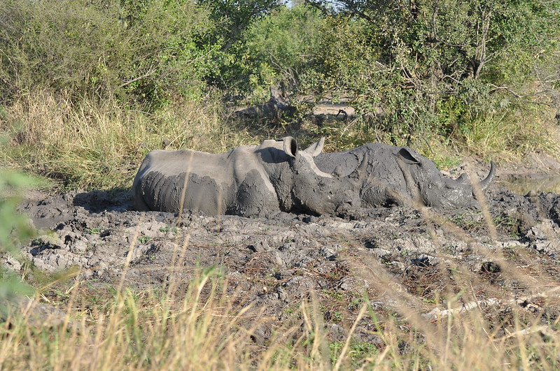 Family Spa for Rhinos