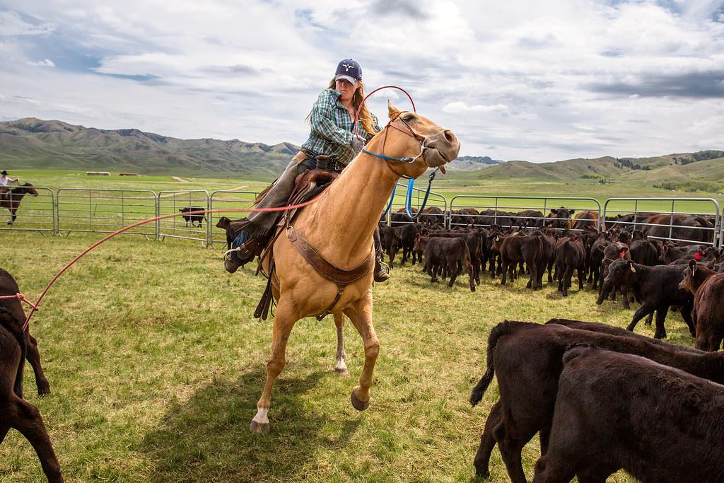 Cowgirl Cinch
