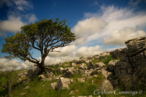 trees sky cloud tree nature clouds landscape nationalpark rocks view wind yorkshire limestone dales malham yorkshiredales gordalescar gordale