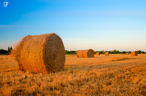 blue summer sky field yellow season landscape outdoors golden cut horizon farming harvest straw hay countryroad goldenhour brownsville praire rur