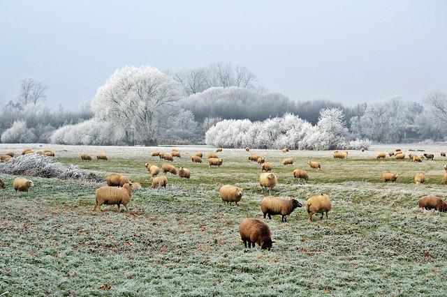 Winterlandschaft 2017 - 1