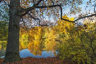 Autumn landscape | by Tambako the Jaguar