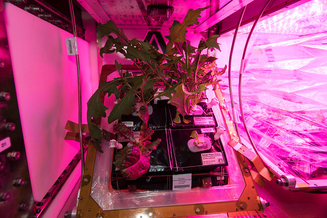 Veggies in Space!
