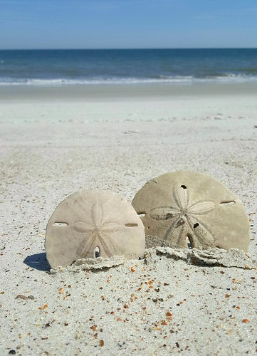 beachtime sanddollar takeawalk fernandinabeachfl thisisflorida sand behealthybehappy beach clearskies sunny