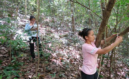 Sun, 07/17/2016 - 11:49 - Nonggang Forest Dynamics Plot