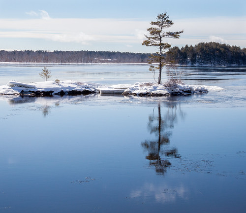 androscoggin maine topsham river island tree winter