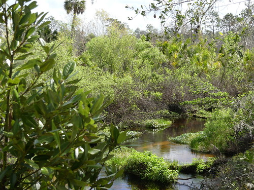 tigercreekpreserve fieldtrip lakewales scrub sandhill pinebarren stevemorrison