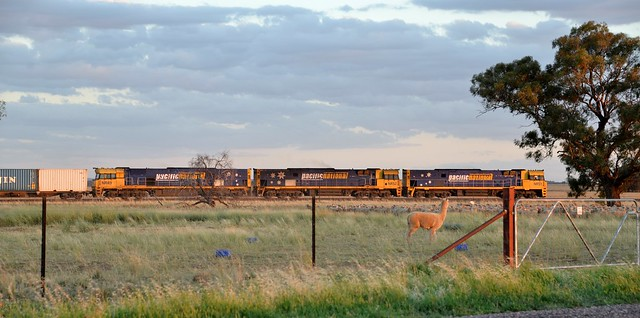 The locals don't normally see an intermodal train on this line...