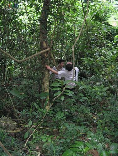 Wed, 04/05/2017 - 15:40 - Nonggang Forest Dynamics Plot