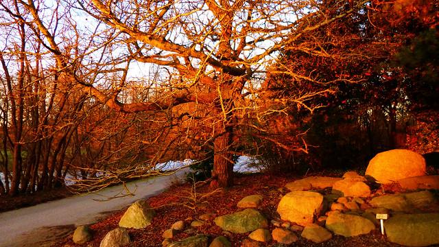Stones And Oak At Dusk Light