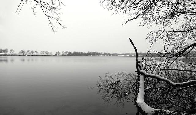 snowy watertree