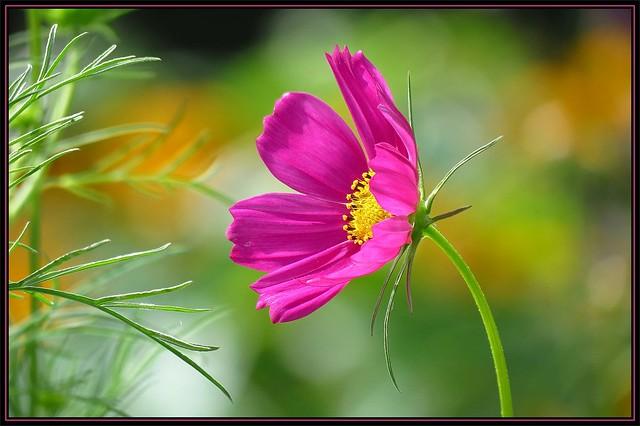 IMG_5717 Garden Universe 8-17-17
