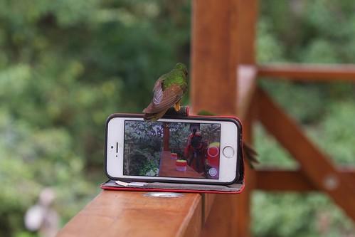 A hummingphone | by kidbirder