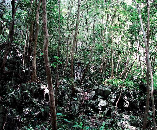 Sun, 07/11/2010 - 13:46 - Nonggang Forest Dynamics Plot