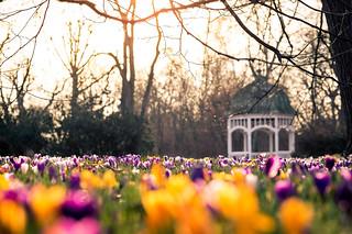 Finally Spring? | by aexl21