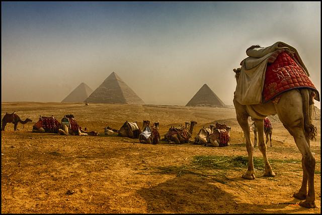 Camellos y pirámides.