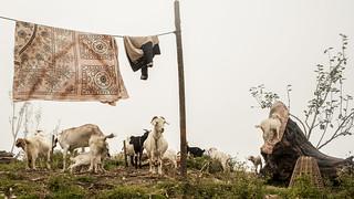 Nepal - Shivapuri National Park