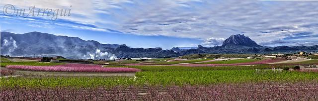 El panorama de la floración en Cieza