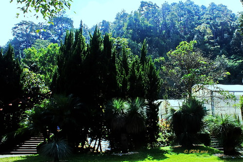 "queensirikitbotanicgardensสวนพฤกษศาตร์สมเด็จพระนางเจ้าสิริกิติ์ maerim แม่ริม chiangmai เชียงใหม่ garden สวน thailand ประเทศไทย เมืองไทย ""canon7dmk2"" earthasia"
