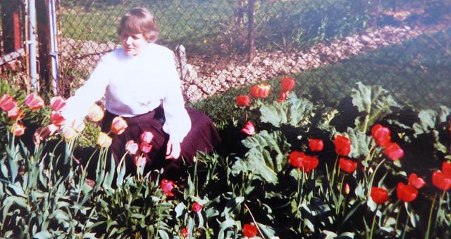 My tulips in Toronto