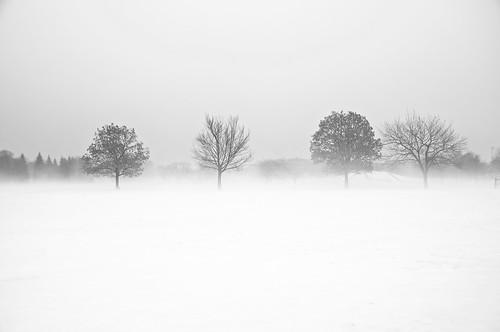 2018 2018©rpd'aoust arbres bw blackwhite brume canada d90 février hiver mist montréal neige nikkor18135mm nikon nikond90 noiretblanc parcjarry snow trees villeray winter