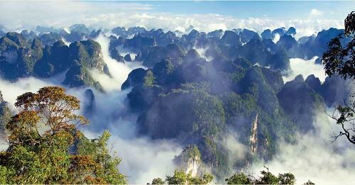 Thu, 10/29/2015 - 09:54 - Nonggang Forest Dynamics Plot