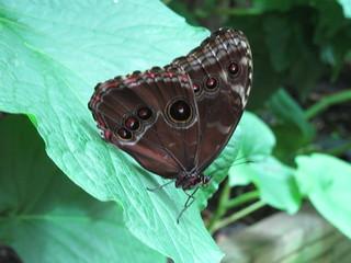 Schmetterling (VI) | by Grüner Nomade