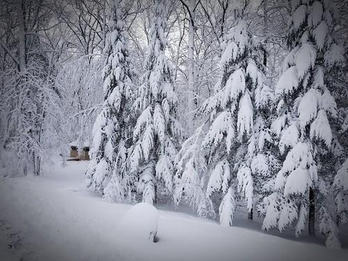 snow pines c3kc