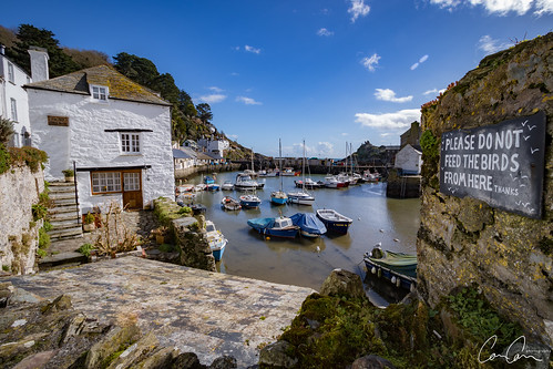 polperro cornwall harbour boats yacht birds seagull apple sexy kittens puppies sunset beach water sky red flower nature blue night white tree green flowers portrait art light snow dog sun clouds