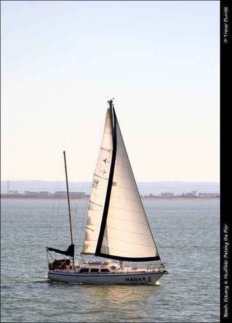 Beach, Estuary & Mudflats: Passing the Pier IMG_3225