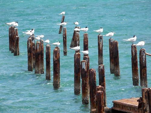 seagulls macabi holguin province cuba bay
