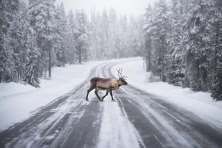 Roadblock | by TheFella